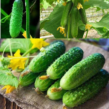 Load image into Gallery viewer, 100pcs Cucumber Seeds Bonsai Fruit Yellow Melon Seeds Garden Vegetable Seeds