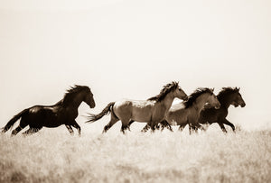 """Dancing in the Meadow""       Wild Horse Photograph."