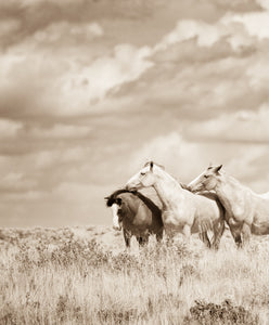 """Loved""      Wild Horse Photograph."