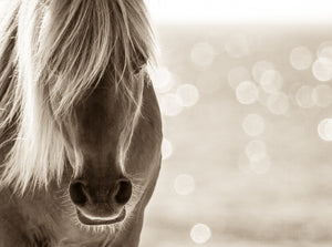 """Untouched Beauty""     Wild Horse Photograph."