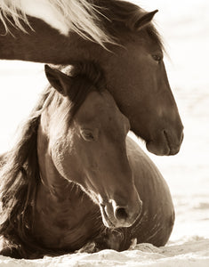 """Rise and Shine""      Wild Horse Photograph."