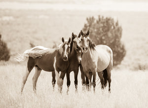 """All Wrapped Up In A Tail""       Wild Horse Photograph."