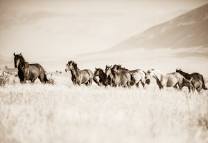 """The Band""     Wild Horse Photograph."