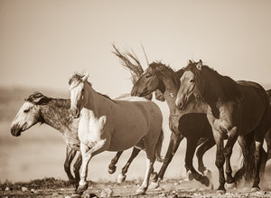 """Rolling and Tumbling""      Wild Horse Photograph."