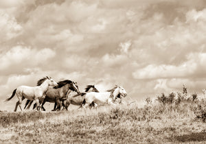 """Chasing the Wind""      Wild Horse Photograph."
