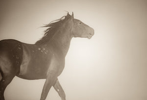 """The Call of the Wild""      Wild Horse Photograph."