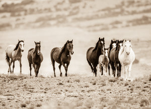 """Rolling Thunder""       Wild Horse Photograph."