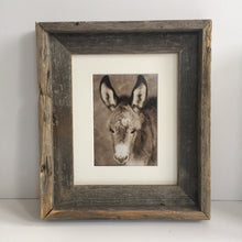 "Load image into Gallery viewer, ""Burro Bond""Wild Burro Photograph."