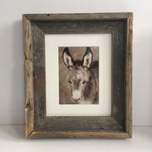 "Load image into Gallery viewer, Wild Burro print, Donkey photograph,Wild Burro Photograph.""Take a load off"""