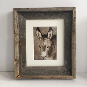 "Wild Burro print, Donkey photograph,Wild Burro Photograph.""Take a load off"""