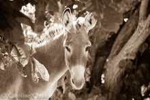 "Load image into Gallery viewer, ""Hello Sunshine"" Wild Burro Photograph"