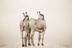 """Who's there?""Wild Burro Photograph."