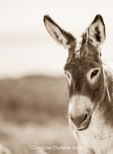 "Load image into Gallery viewer, ""Howdy""Wild Burro Photograph."