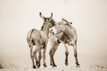 "Load image into Gallery viewer, ""The Burro Chase""Wild Burro Photograph."