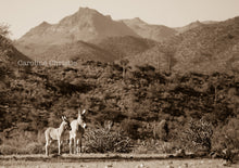 "Load image into Gallery viewer, ""Burro Land""Wild Burro Photograph."