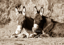 "Load image into Gallery viewer, ""Burro Chill Time""Wild Burro Photograph."