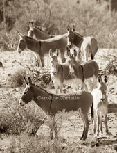 "Load image into Gallery viewer, Wild Burro print, Donkey photograph,Wild Burro Photograph.""The Burro Look"""