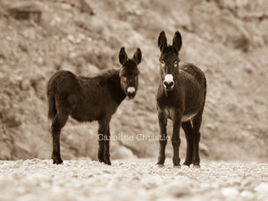 """Me and You""Wild Burro Photograph."