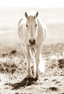 """Sweet Lady""     Wild Horse Photograph."