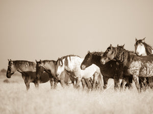 """Joy in the Meadow""     Wild Horse Photograph."