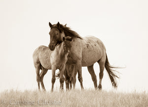 """You And Me""     Wild Horse Photograph."