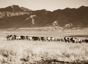 """The Unstoppable Band""     Wild Horse Photograph."