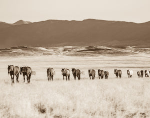 """The Big Band""     Wild Horse Photograph."