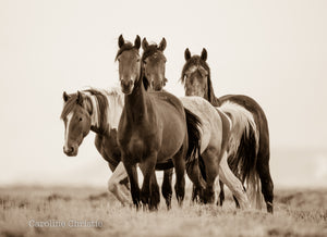"""Unknown Destiny""    Wild Horse Photograph."