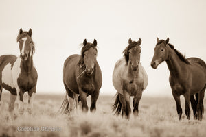 """We all stand together""   Wild Horse Photograph."