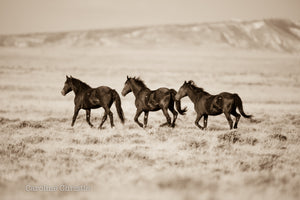 """Three Wild Hearts""   Wild Horse Photograph."