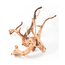 Load image into Gallery viewer, SPIDERWOOD DRIFTWOOD 30 cm - 12 inch +