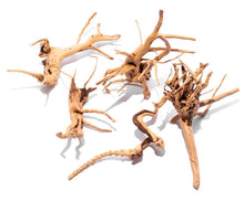 Load image into Gallery viewer, SPIDERWOOD DRIFTWOOD 36 cm - 14 inch +