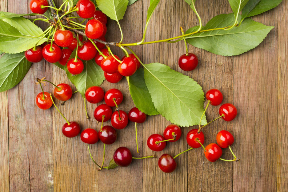 Today it is well known that tart cherries have more benefits than just recovery - renewed energy, enhanced vitality, and mental clarity, to name a few.