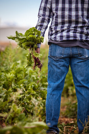 high-quality nitrate-rich produce dried into concentrated powder | NutriGardens