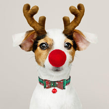 Load image into Gallery viewer, Christmas Dog Collar & Bell