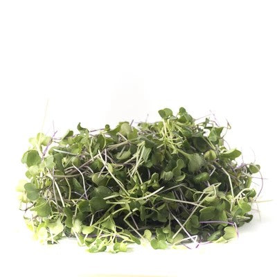 Spicy Mix Microgreens