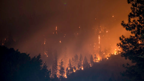 forest fire emergency bug out plan