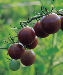 Tomato: Black Cherry - seeds