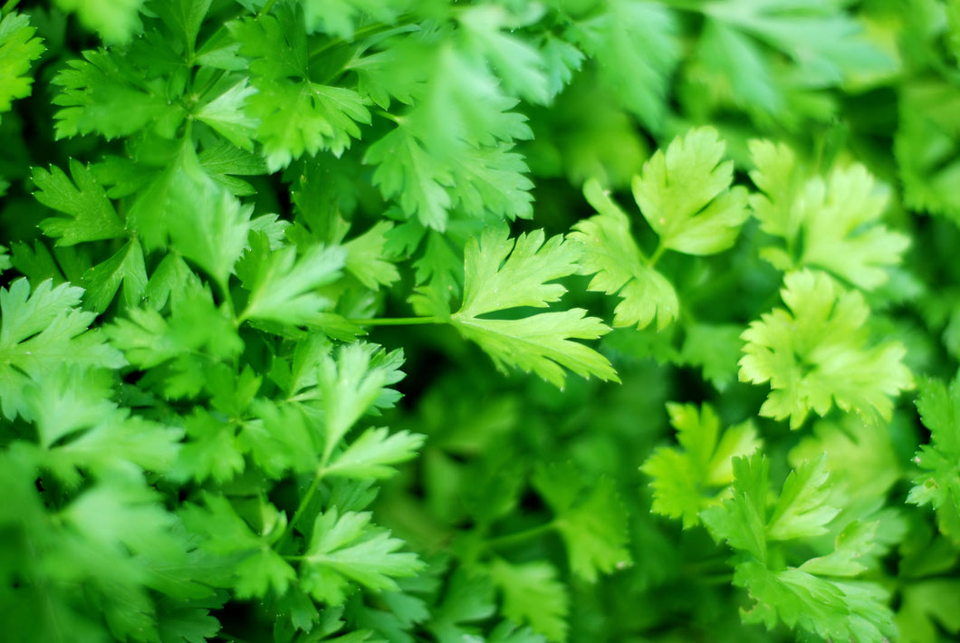 Parsley (2 oz)