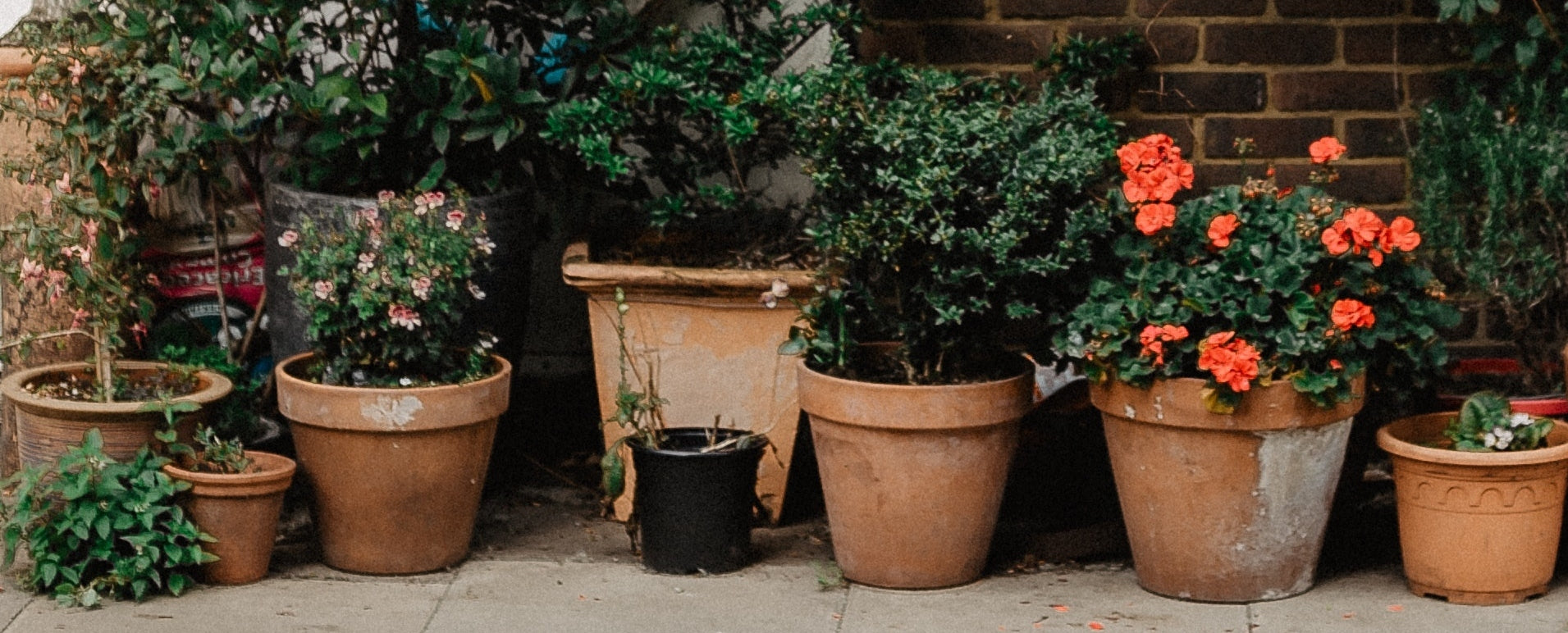 Terracotta Pots With Plants And Flowers