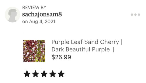 Sand Cherry review