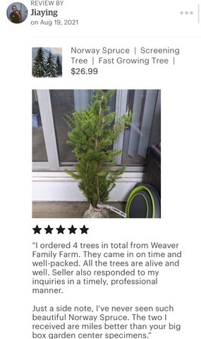 Norway spruce weaver family farms nursery review