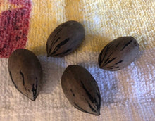 Load image into Gallery viewer, fresh pecan nuts for sale
