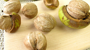 shell bark hickory tree nuts