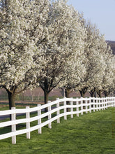 Load image into Gallery viewer, white dogwood landscaping