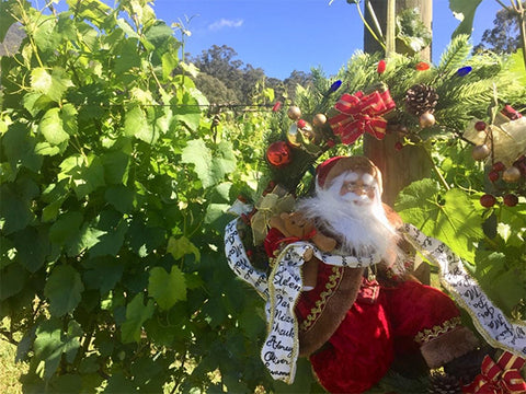 Santa in the vineyard.