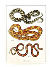 Load image into Gallery viewer, Snake Illustrated Card