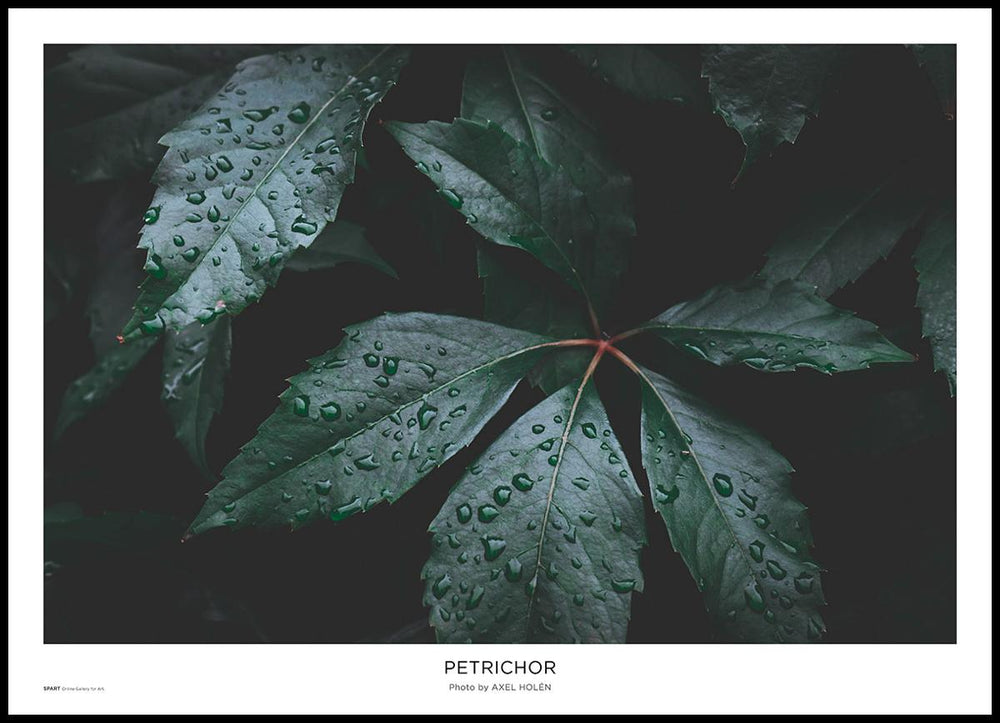 Petrichor Poster