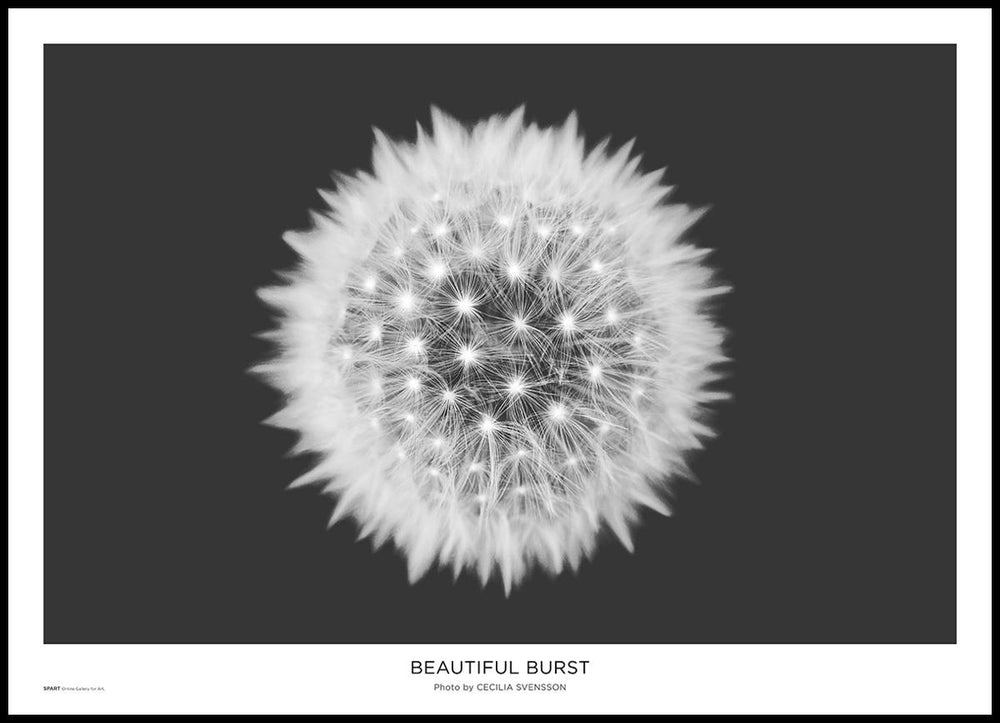Beautiful Burst