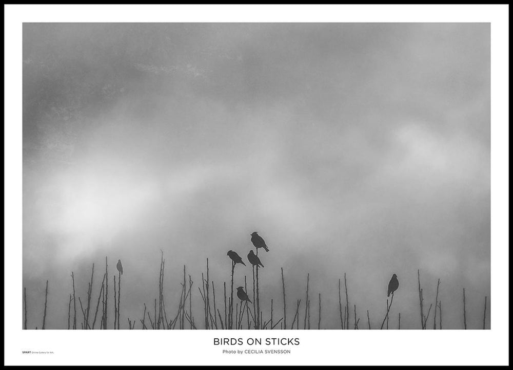 Birds on Sticks